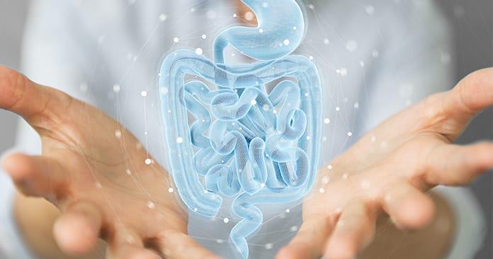 flore intestinal